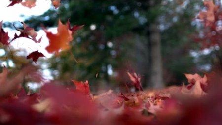 دانلود فوتیج slow motion ریختن برگ پاییزی بر روی زمین