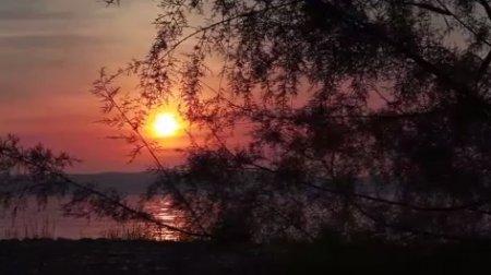 دانلود فوتیج غروب آفتاب از پشت درخت
