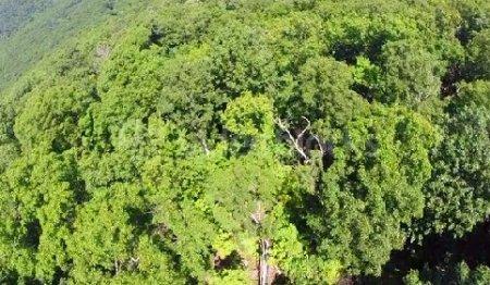 دانلود فوتیج تصویر هوایی جنگل سبز