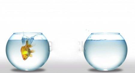دانلود فوتیج زیبای شنا کردن ماهی گلی در تنگ آب