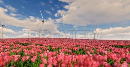 دانلود فوتیج طبیعت زیبا- چرخش آسیاب بادی و دشت گل