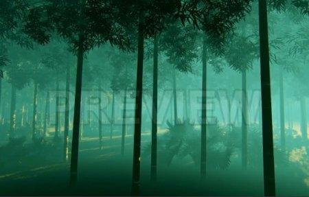دانلود فوتیج جنگل بامبو در مه